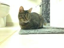 猫在一个白色和灰色卫生间里 库存照片
