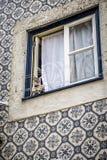 猫在一个窗口里在Alfama区在里斯本 库存图片