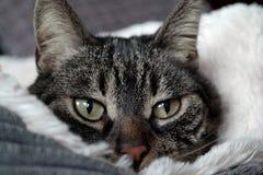 猫在一张蓬松床上 免版税库存照片