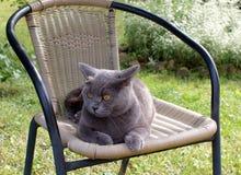 猫在一把椅子睡觉在庭院里 库存图片