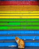 猫在五颜六色的被绘的台阶前面坐 库存图片