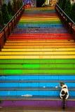 猫在五颜六色的被绘的台阶前面坐 免版税库存照片