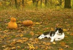 猫在公园在 背景棒万圣节月光附注 库存图片