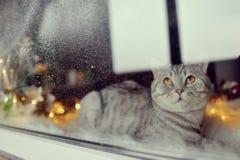 猫在冬天窗口里 图库摄影