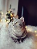 猫在冬天窗口里 库存照片