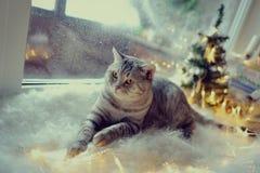 猫在冬天窗口里 免版税库存图片