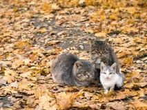 猫在凉快的秋天天气互相帮助保留温暖 免版税库存照片