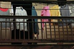 猫在到处 库存照片