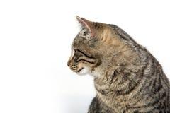 猫在厨房里 库存照片