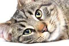 猫在厨房里 库存图片