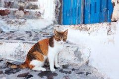 猫在圣托里尼,希腊 库存照片