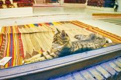 猫在地毯商店 库存照片