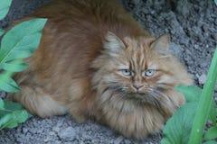 猫在城市公园 免版税库存图片