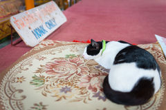 猫在寺庙的一张地毯睡觉 免版税库存照片