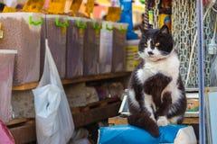 猫在市场 免版税库存照片