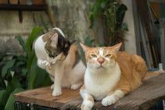 猫在庭院查寻 免版税库存图片