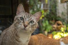 猫在庭院查寻 库存照片