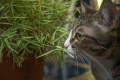 猫在庭院查寻 库存图片