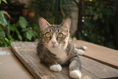 猫在庭院查寻 图库摄影