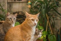 猫在庭院查寻 免版税图库摄影