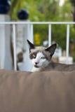 猫在庭院里坐长沙发 免版税库存图片