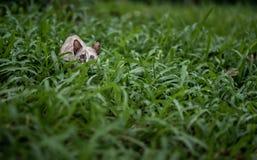 猫在庭院里有绿草背景 库存图片