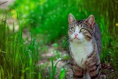 猫在庭院里 免版税库存图片