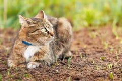 猫在庭院里 免版税库存照片