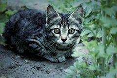 猫在庭院里 库存照片