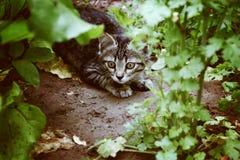 猫在庭院里 免版税图库摄影