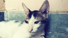 猫在房子里 库存照片