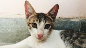 猫在房子里 免版税图库摄影