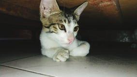 猫在房子里 免版税库存照片