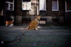 猫在房子附近坐 图库摄影