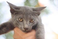 猫在手中 库存照片