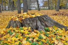 猫在有叶子的下落的叶子坐 免版税图库摄影