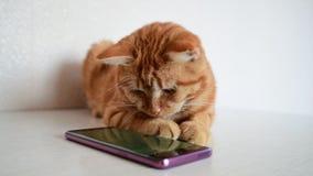 猫在有计算机游戏老鼠的电话使用 股票录像