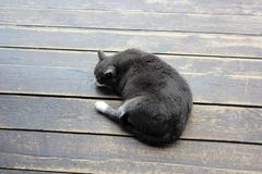 猫在木地板上取暖在阳光下 库存图片