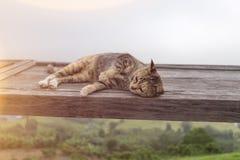 猫在木躺下 免版税库存图片