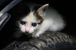 猫在机器轮子  免版税库存图片