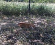 猫在树荫下 免版税库存照片