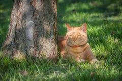 猫在树荫下 库存照片