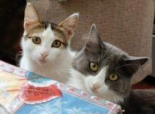 猫在桌上 免版税库存照片