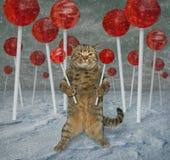 猫在棒棒糖森林里 免版税库存照片