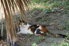 猫在棕榈树下 库存照片