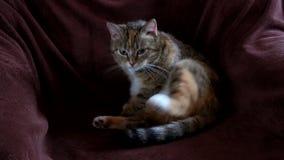 猫在椅子坐 股票录像