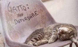 猫在椅子睡觉户外,在天之前 库存照片