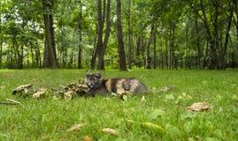 猫在秋天庭院里 图库摄影
