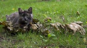 猫在秋天庭院里 库存照片
