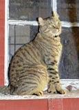 猫在窗口坐老议院 库存图片